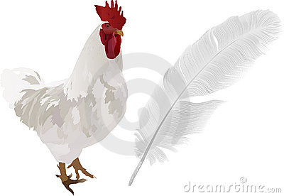 Light rooster and feather on white