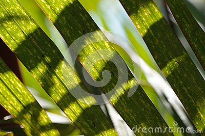 Light And Shadow On Leaf Stock Photo - Image: 6597620