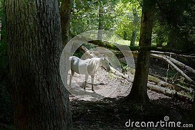 Light Stallion
