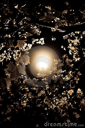 A Light Through the Trees