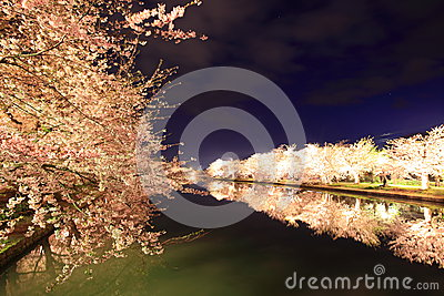 Light up of cherry tree