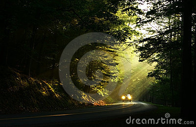 Light In The Woods Stock Photography - Image: 10617072
