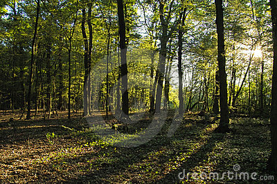 Light and woods