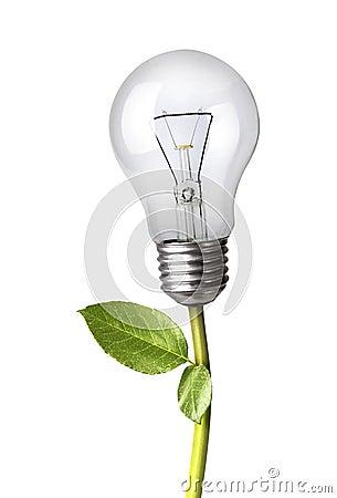 Lightbulb as A Plant