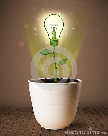 Free Lightbulb Plant Coming Out Of Flowerpot Stock Photo - 33469770