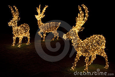 Lighted Reindeers for Christmas