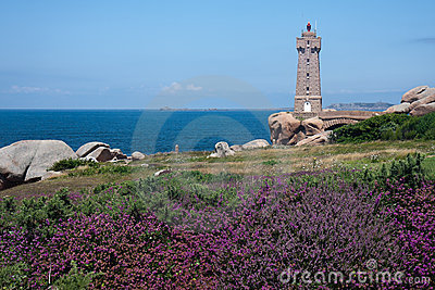 Lighthouse at coast of Brittany with purple heath