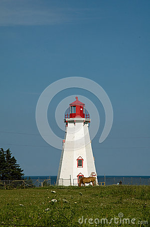 Lighthouse with horse