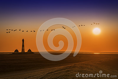 Lighthouse on sunset with birds