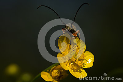 Lightning Bug Stock Photo Image 42378045