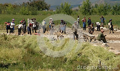 Lijiang, Twp, China: Workers in Field Editorial Stock Image