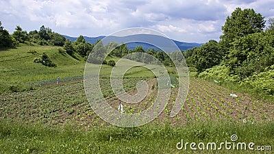 Lika acres 3