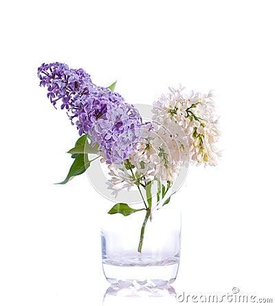 Lilac bouquets.