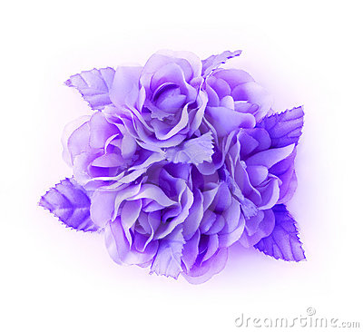 Free Lilac Flowers Isolated Royalty Free Stock Photo - 12444325