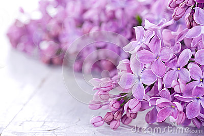 Lilacs in closeup