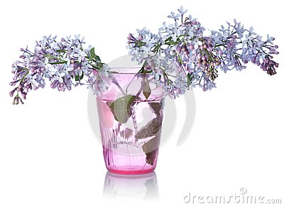 Lilacs In A Glass Royalty Free Stock Photo - Image: 19779025