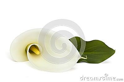 Lilie mit Pfad