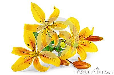 Lilies yellow