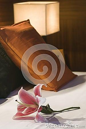 Lilium цветка
