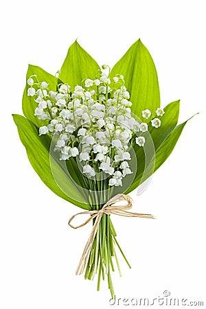Lilja-av--dalen blommar på vit