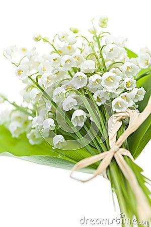 Liljekonvaljen blommar på vit
