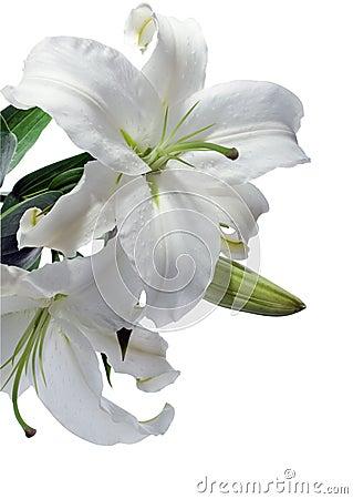Lilly biel