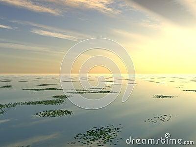Lilly Pad Lake 2