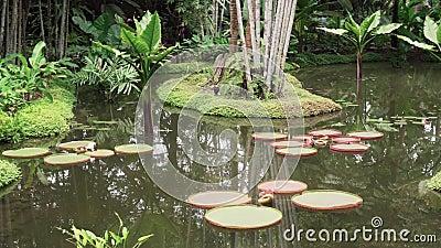 Lilly Pond calma archivi video