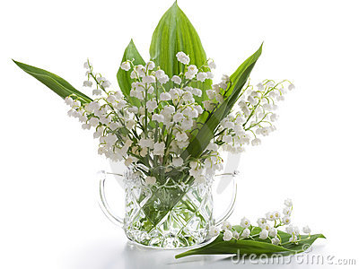 Lilly Of The Valley Royalty Free Stock Image - Image: 19432466