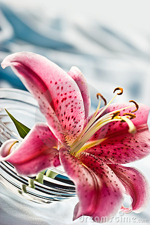 Free Lily Royalty Free Stock Photography - 4258747