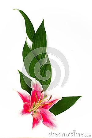 Lily corner