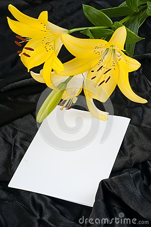 Lily And Drapery. Royalty Free Stock Photos - Image: 15072768