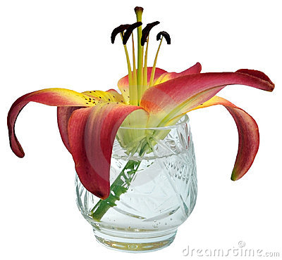 Lily flower in a crystal glass