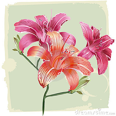 Lily flowers grunge background