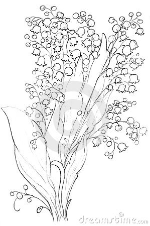 Lily flowers sketch, drawing