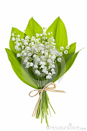 Free Lily-of-the-valley Flowers On White Royalty Free Stock Photography - 29428837