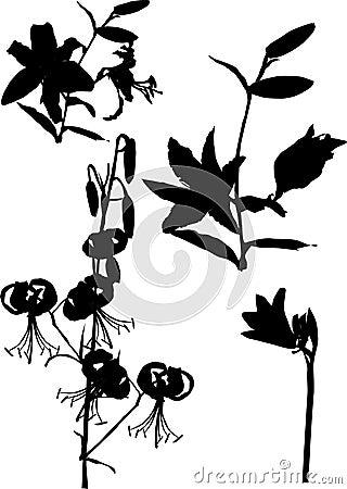 Lily ornamental silhouette