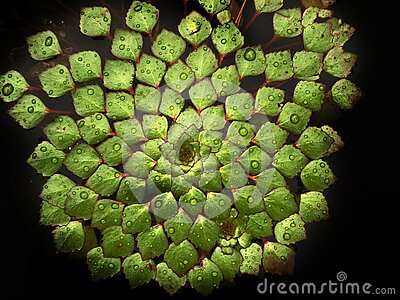 Lily Pad Abstraction  Free Public Domain Cc0 Image