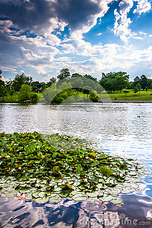 Free Lily Pads In The Pond At Patterson Park In Baltimore, Maryland. Stock Images - 47445064