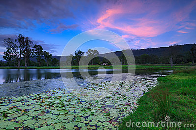 Lily pond at twilight