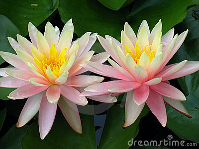 Lily Twins