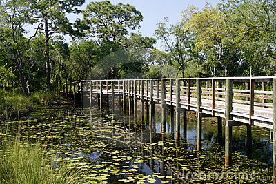 Lilypads and wooden boardwalk