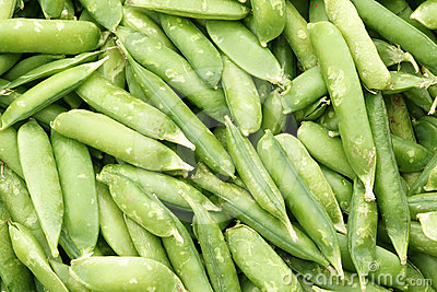 Lima-bean pods