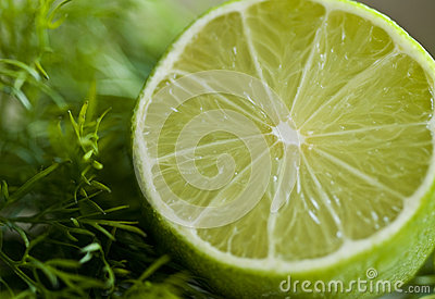Lime and dill