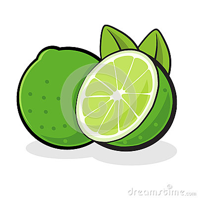 Lime Fruit Vector Illustration