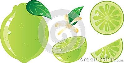 Lime fruits icon set