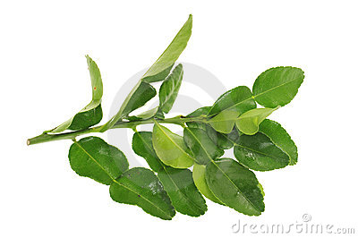 Lime Leaves