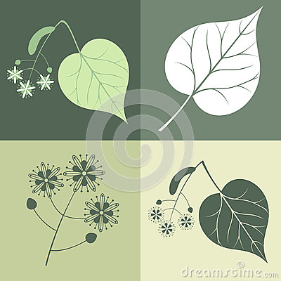 Lime Tree Vector Illustration