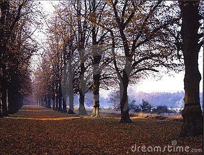 Lime Tree Walk. Clumber Park. England