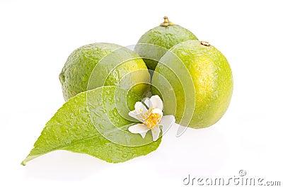 Limes Closeup